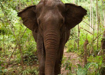 Bunong elephant project
