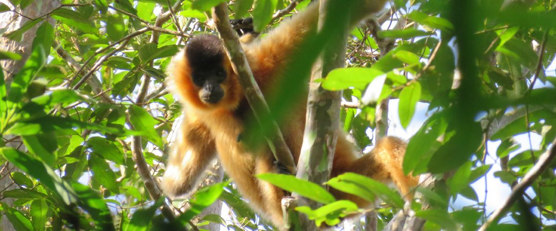 Jahoo Gibbon Camp at Seima Forest