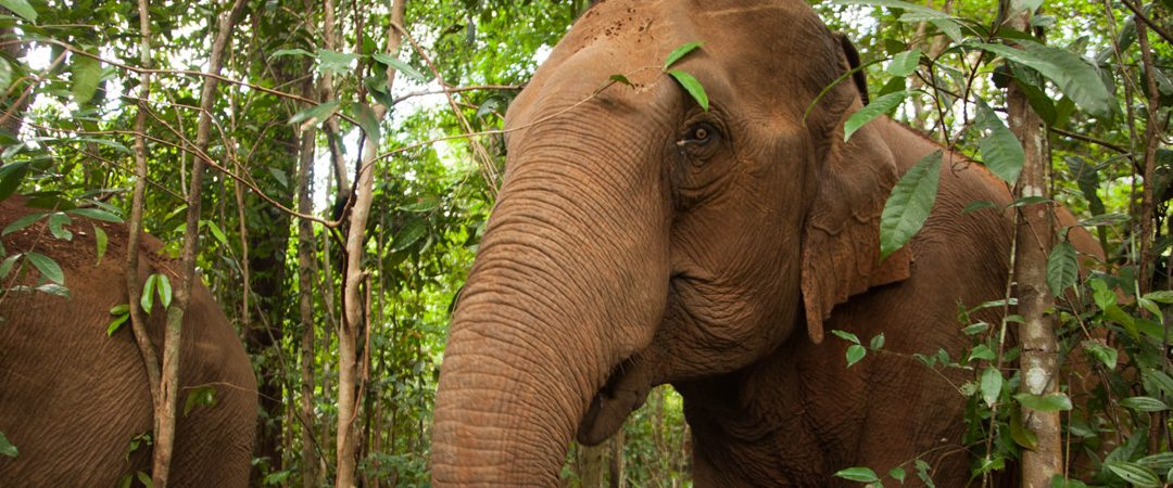 Mondulkiri Elephant & Wildlife sanctuary