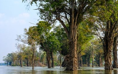 Mekong boat trips out of Osvay