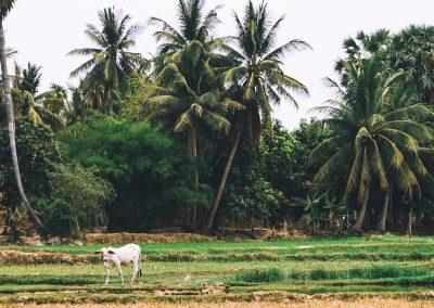 Tbeng Kulen Homestays Siem Reap