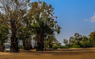 My time at Run Ta Ek Eco Village, Siem Reap